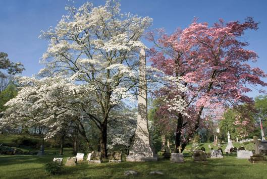 Frankfort Cemetery Trees