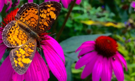 After Hours at Liberty Hall - Butterfly Garden Party - August 6, 2015