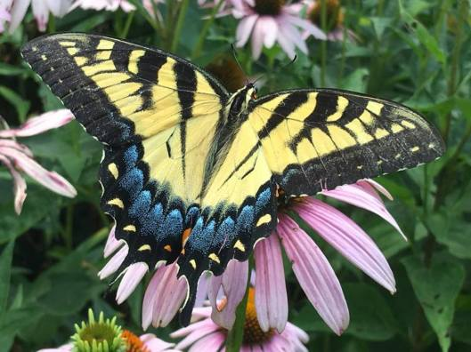 Planting for Pollinators at Salato Wildlife Education Center - 8-27-16
