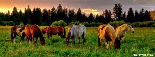 horse-club-meeting